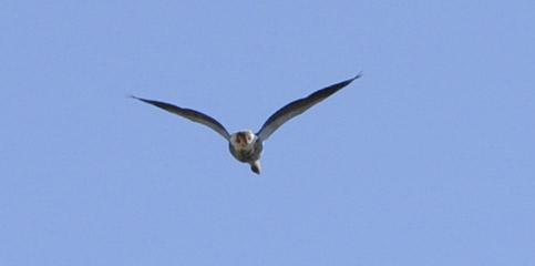 Nykvarn med flyg